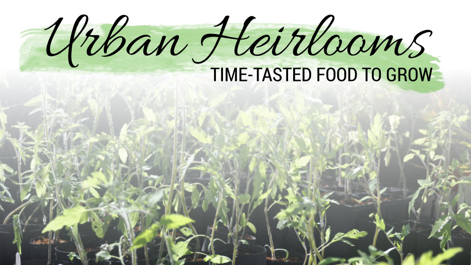 Urban Heirlooms: Time-Tasted Food You Can Grow